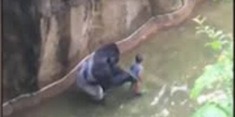 Gorilla Warfare for Animal Activists?