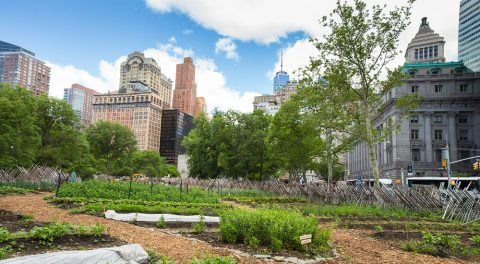 Government Giving Away Millions for Urban Farms