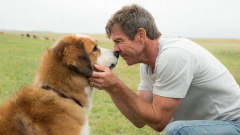 BREAKING: Hollywood Reporter VERIFIES PETA Video A FAKE!