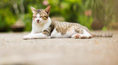 Cruel Cat Killer Gets 16 Year Sentence + Cecil's Son Killed