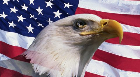 Will You Help the American Eagle?