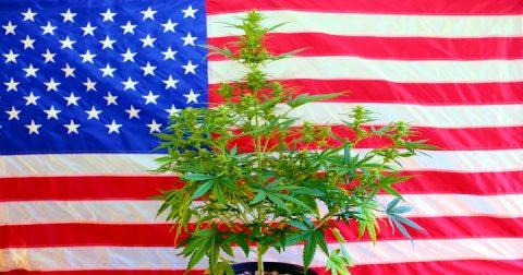 Will Trump Legalize Pot?