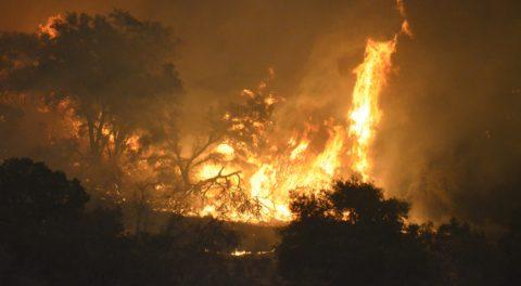 129 Million Dead Trees in California