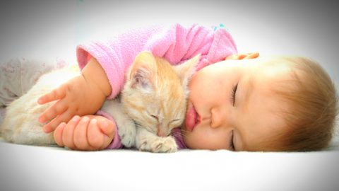 Babies and Cats: Both are Victims, but only One is Spared Pain